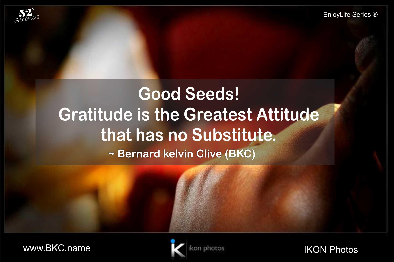 gratitude_attitude